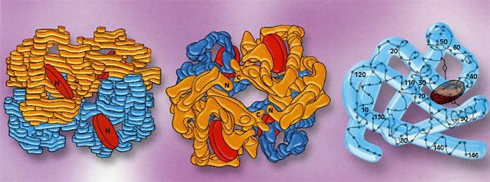 Дополнительные методы обследования железодефицитной анемии thumbnail